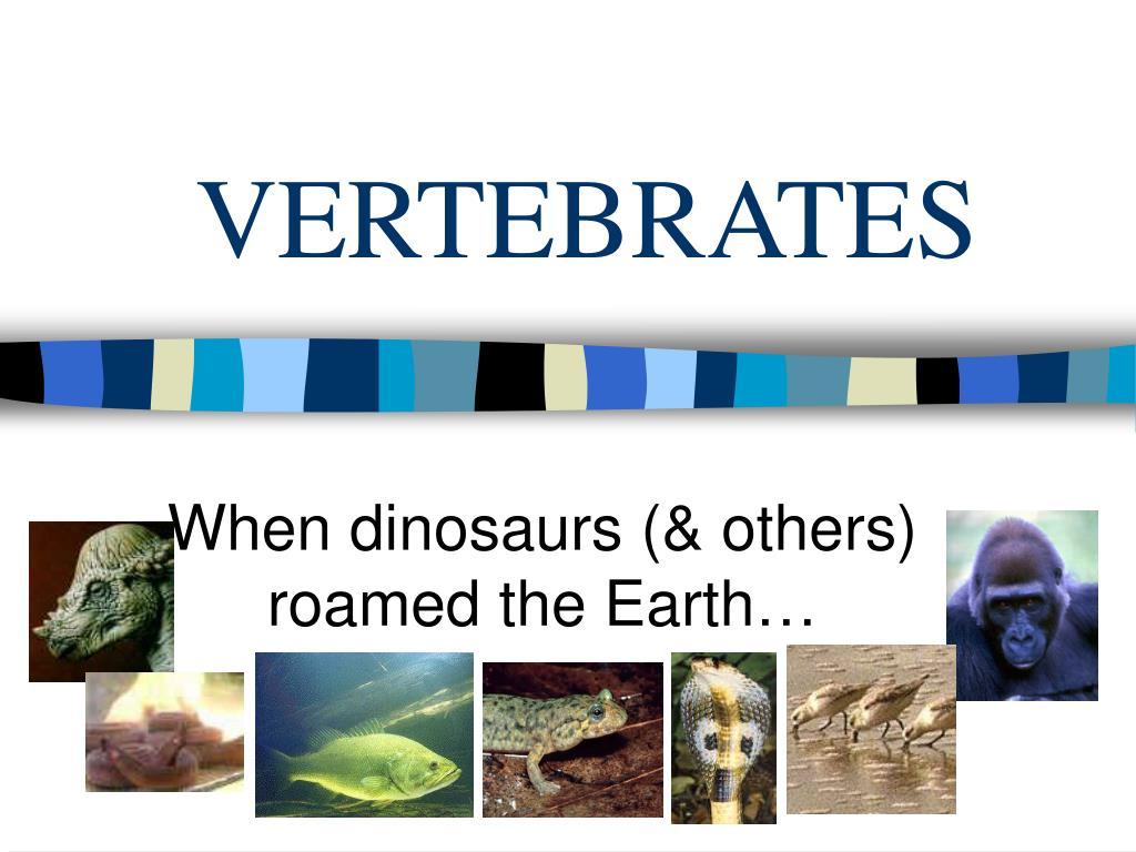 vertebrates l.