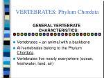 vertebrates phylum chordata