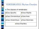 vertebrates phylum chordata5