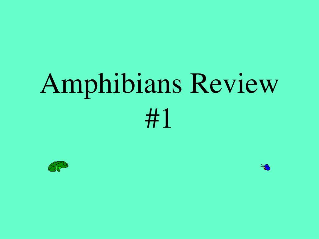 amphibians review 1 l.