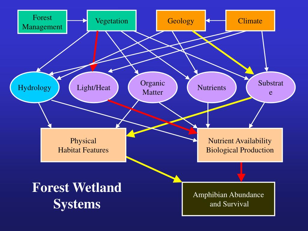 Forest Wetland
