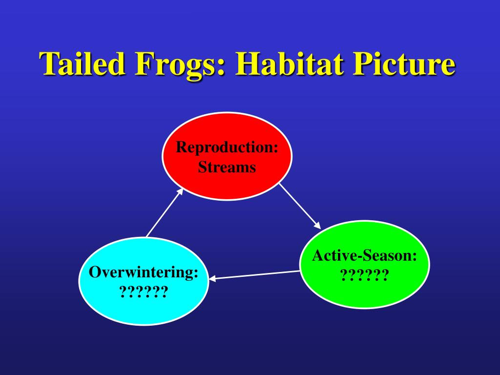 Tailed Frogs: Habitat Picture