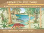 carboniferous coal swamp