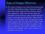 types of fungus observed