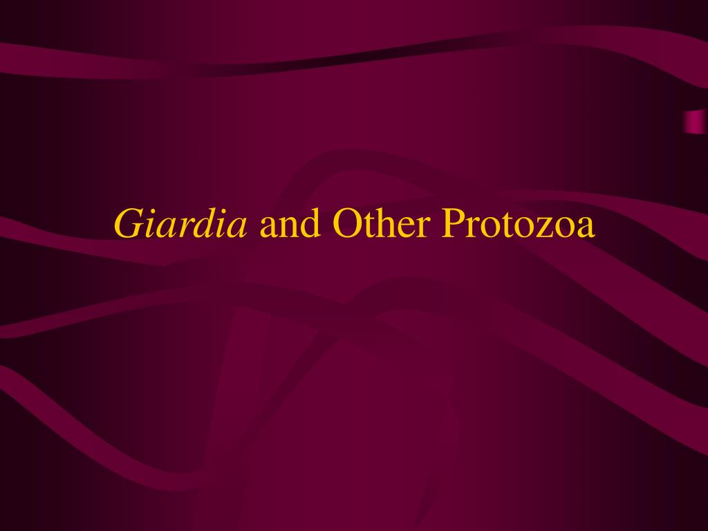 giardia and other protozoa l.