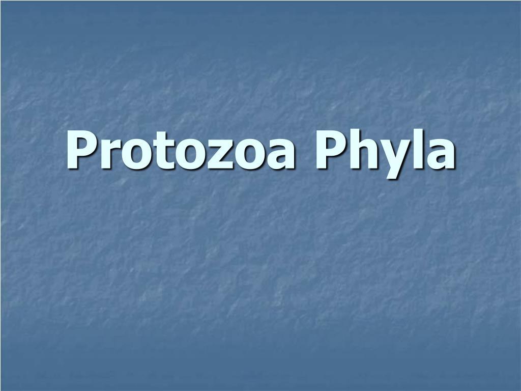 protozoa phyla l.