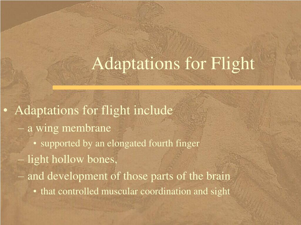 Adaptations for Flight