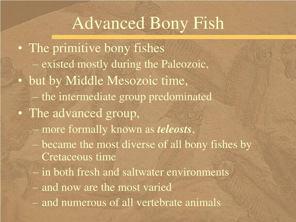 Advanced Bony Fish