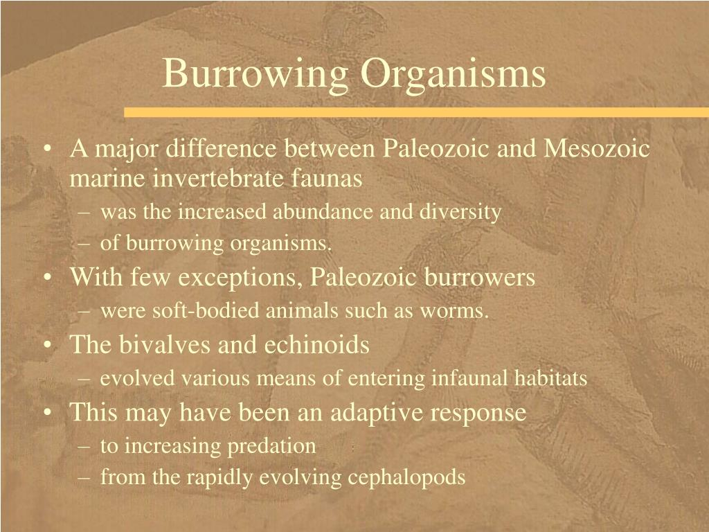 Burrowing Organisms