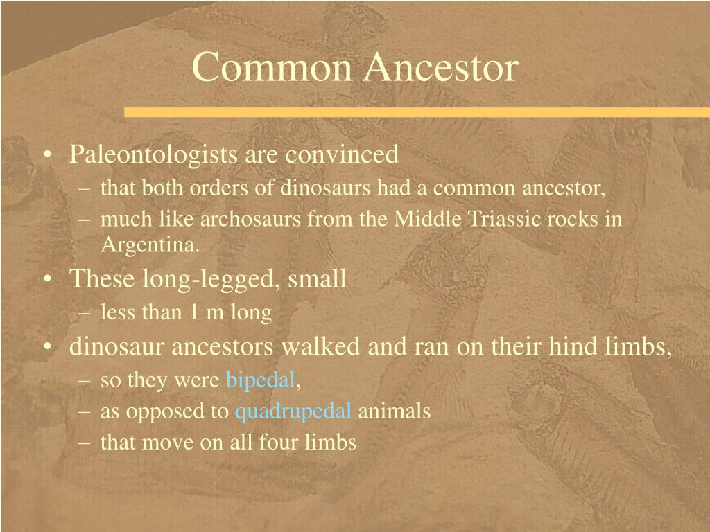 Common Ancestor