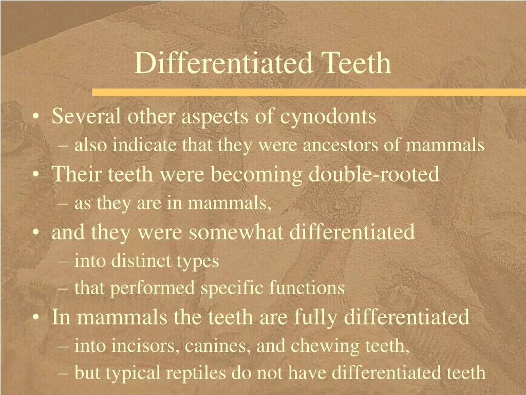 Differentiated Teeth