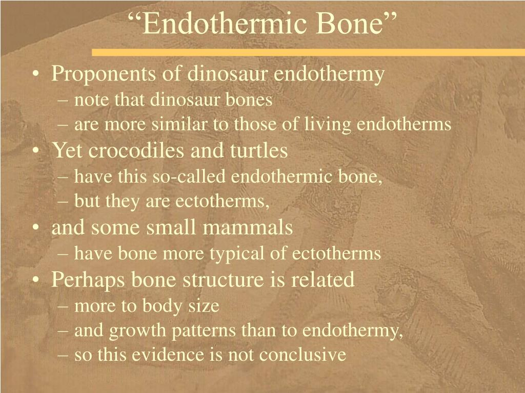 """Endothermic Bone"""