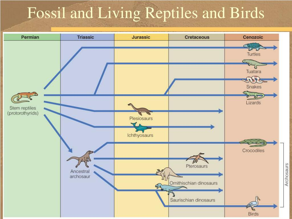 Fossil and Living Reptiles and Birds