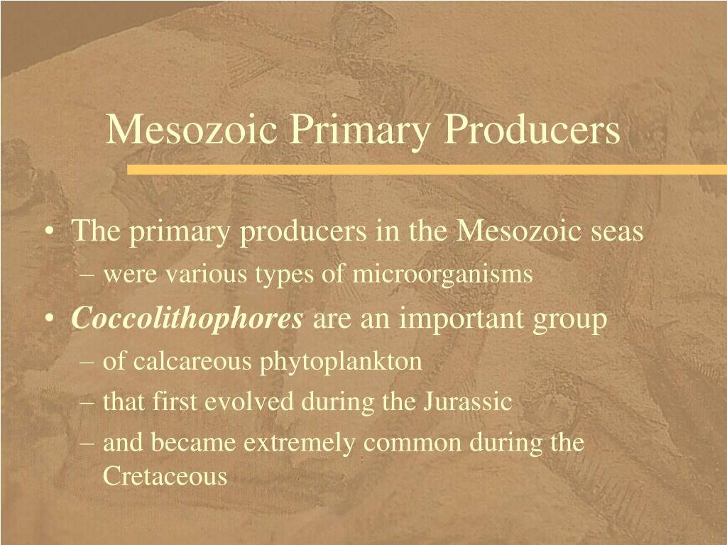 Mesozoic Primary Producers
