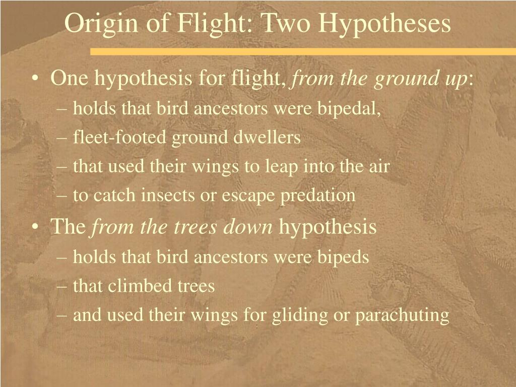 Origin of Flight: Two Hypotheses