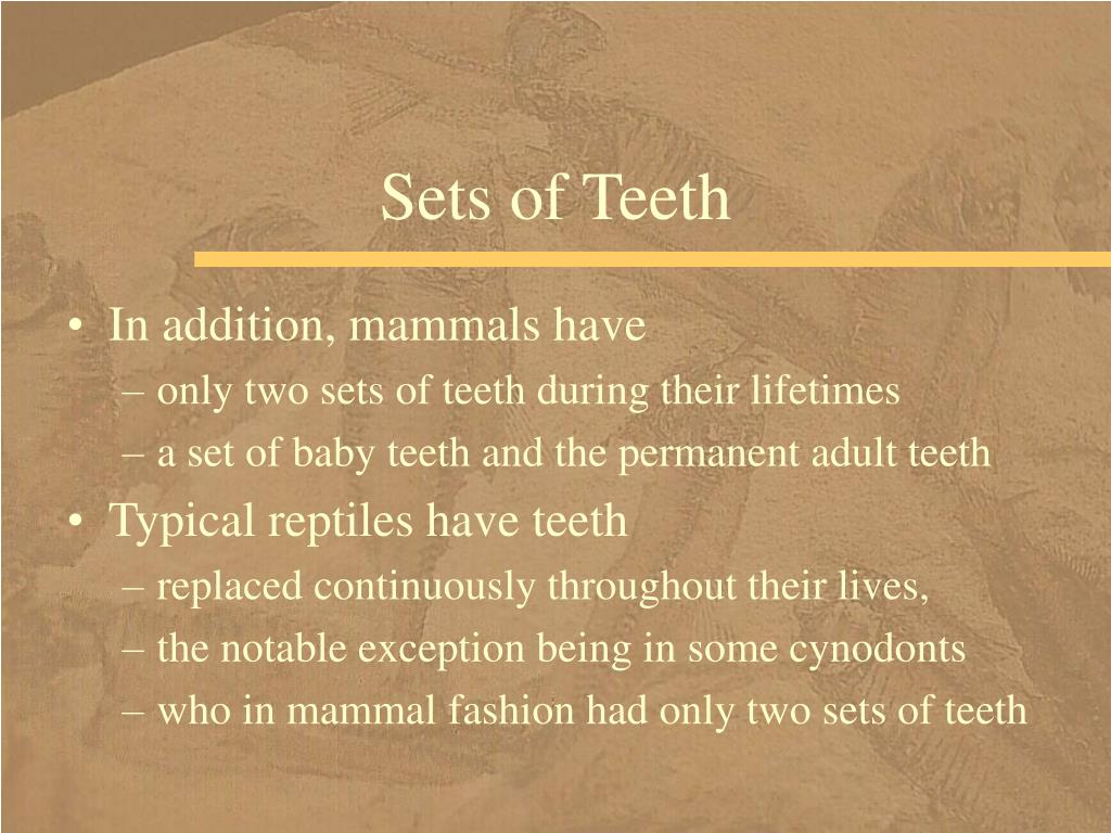 Sets of Teeth