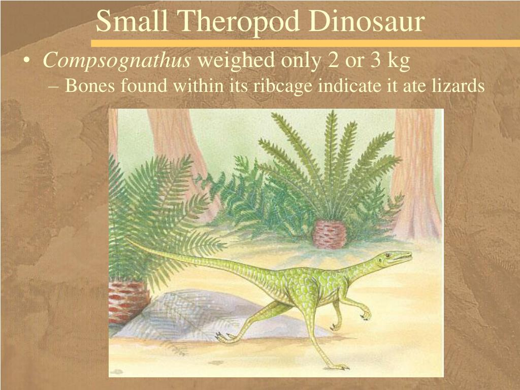 Small Theropod Dinosaur