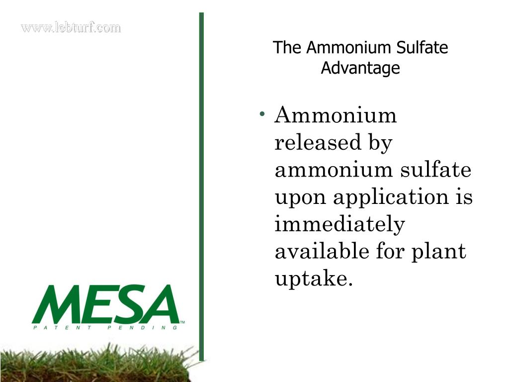 Ammonium released by ammonium sulfate upon application is immediately available for plant uptake.