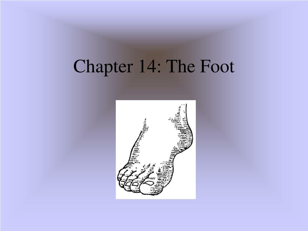 chapter 14 the foot