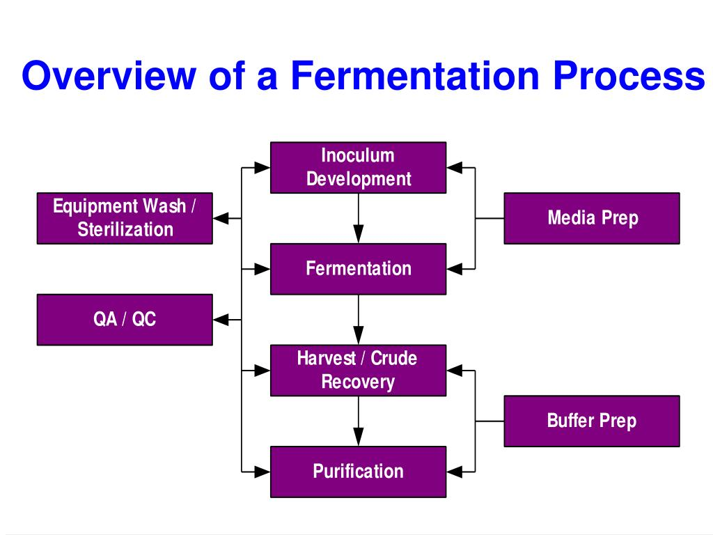 Overview of a Fermentation Process