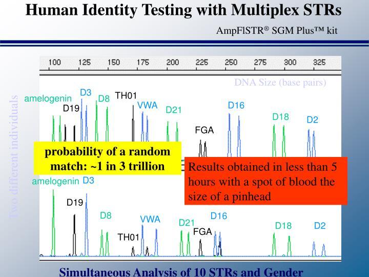 Human Identity Testing with Multiplex STRs