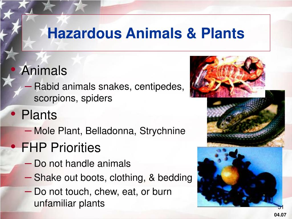 Hazardous Animals & Plants