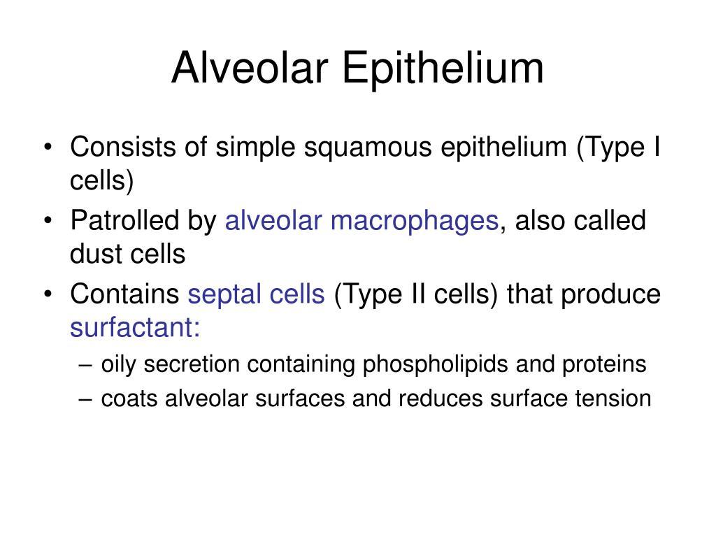 Alveolar Epithelium