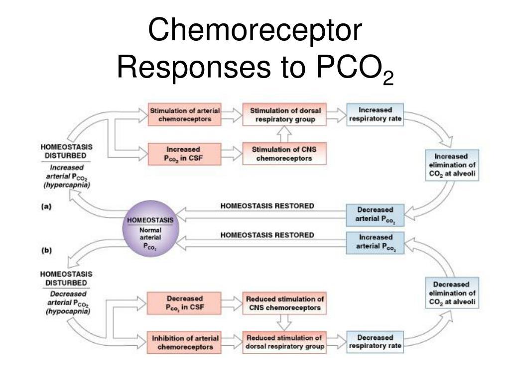 Chemoreceptor