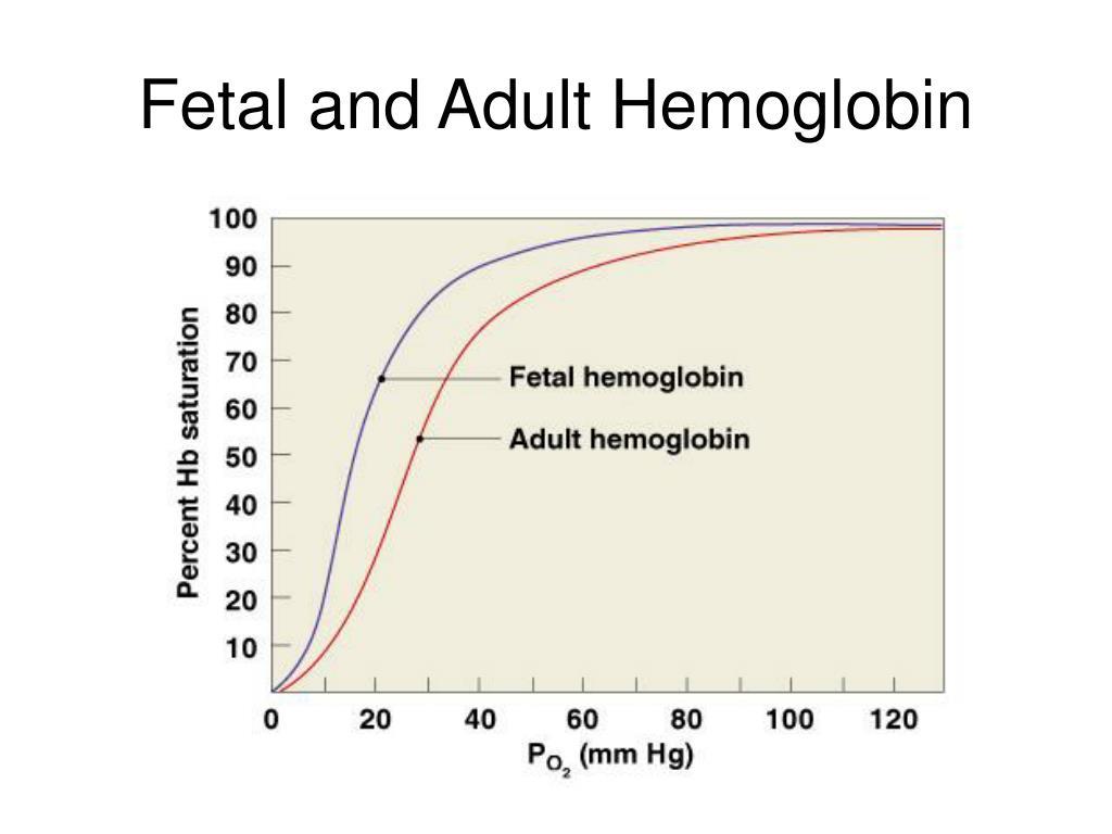 Fetal and Adult Hemoglobin