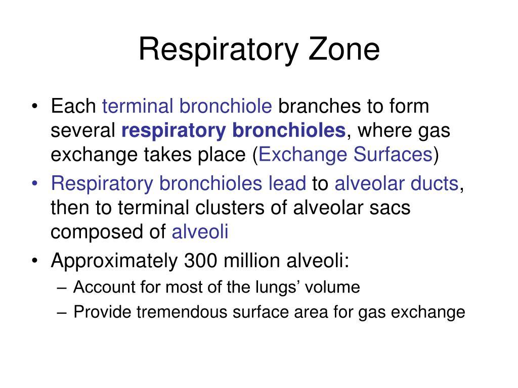 Respiratory Zone