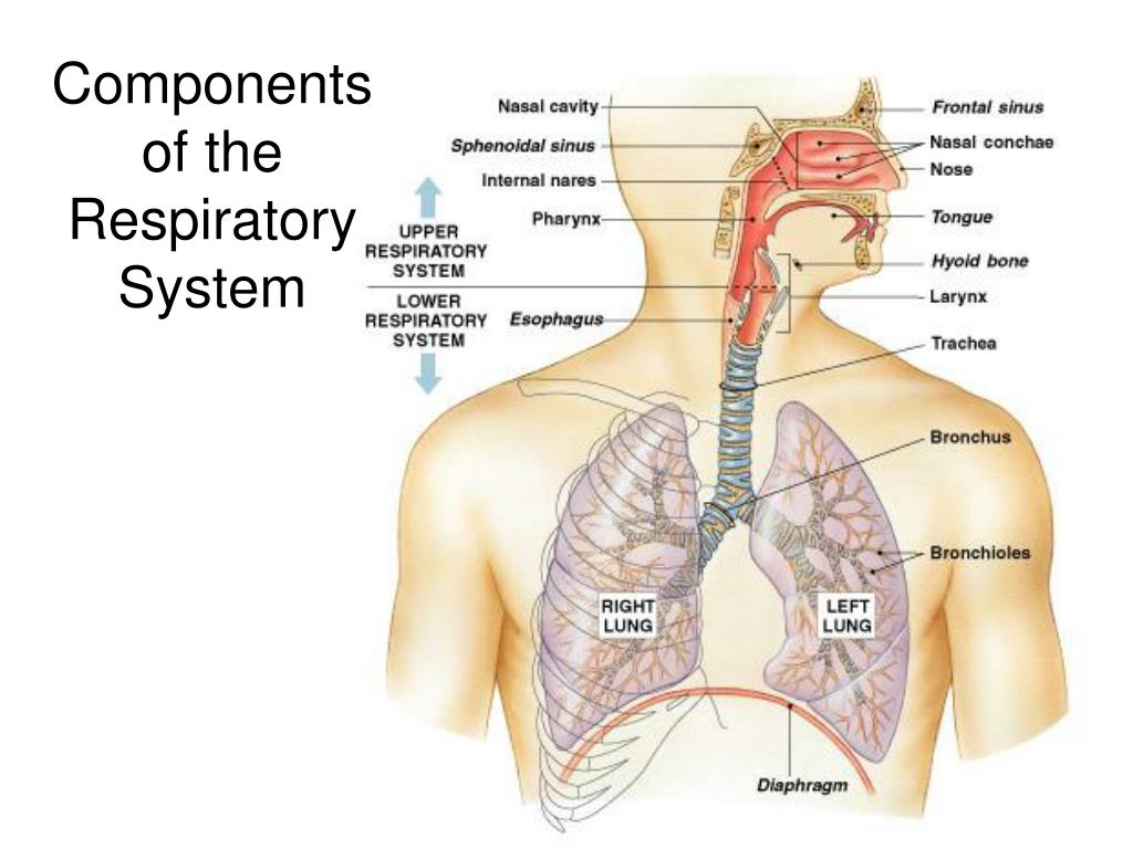 Components of the