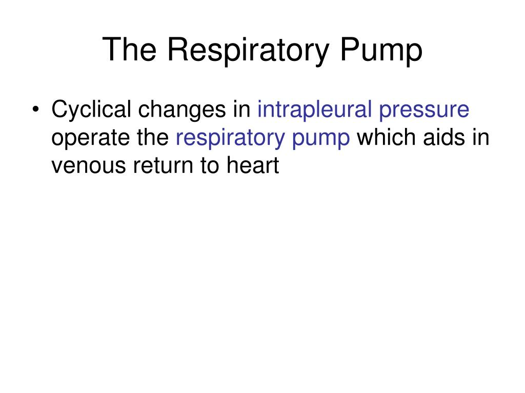 The Respiratory Pump