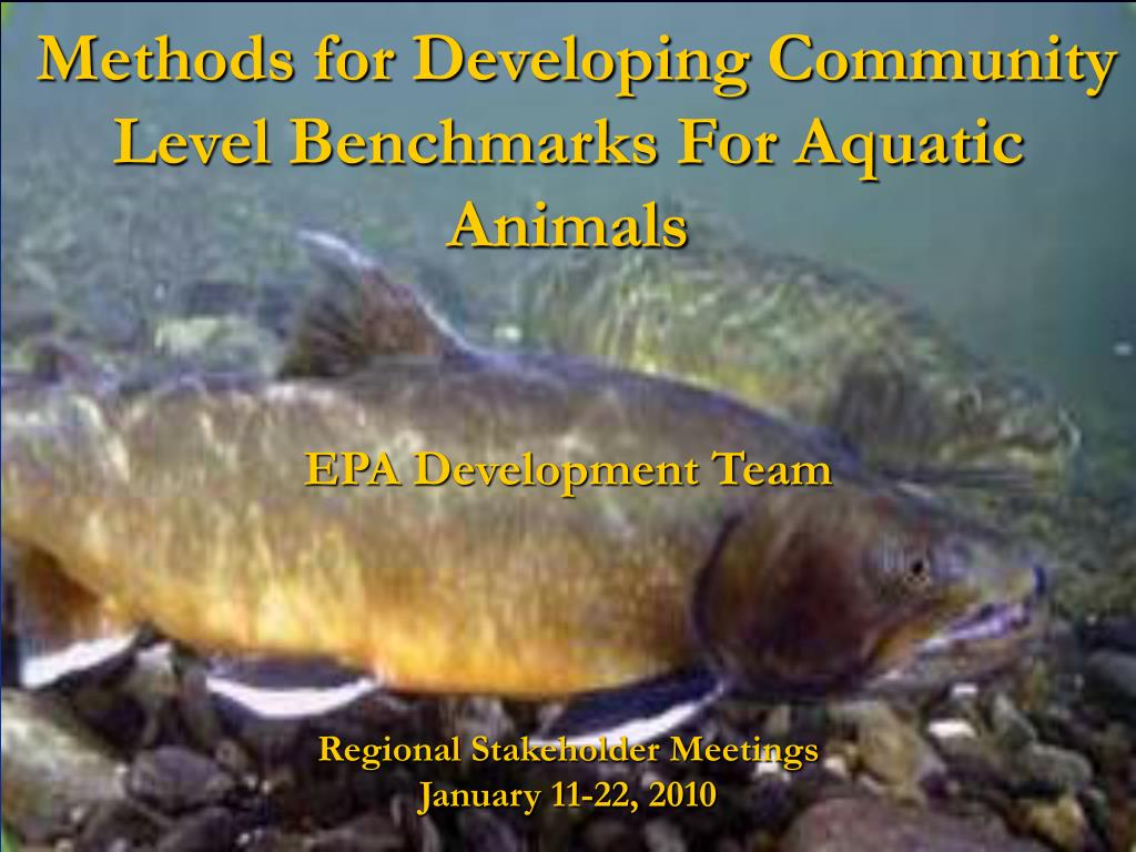 methods for developing community level benchmarks for aquatic animals l.
