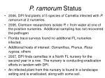 p ramorum status