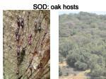 sod oak hosts