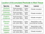location of accumulated pesticide in plant tissue