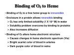binding of o 2 to heme
