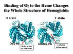 binding of o 2 to the heme changes the whole structure of hemoglobin