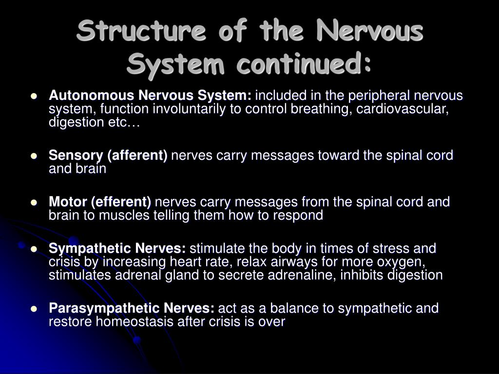 Structure of the Nervous System continued: