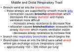 middle and distal respiratory tract