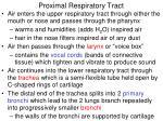 proximal respiratory tract