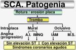 sca patogenia17