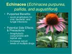 echinacea echinacea purpurea pallida and augustiflora