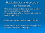 haplodiploidy and eusocial hymenoptera