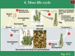 4 moss life cycle