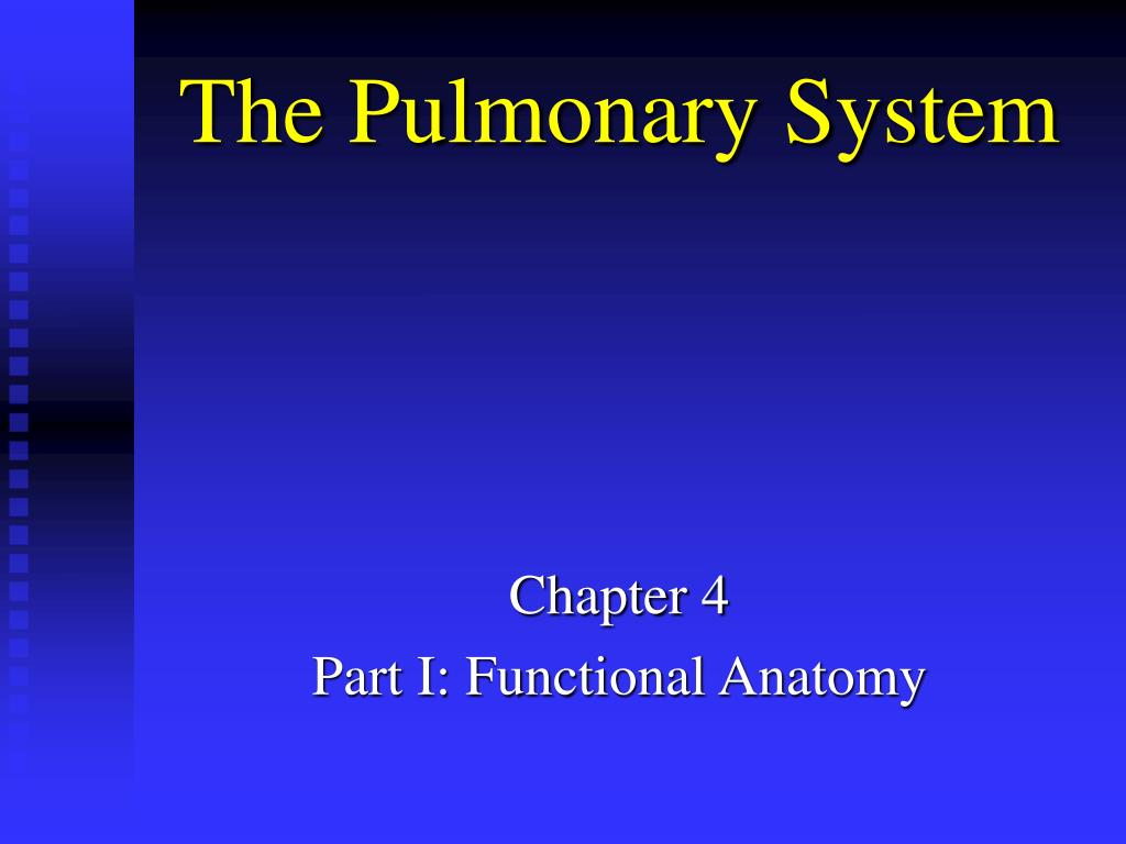 the pulmonary system l.