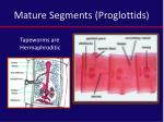 mature segments proglottids