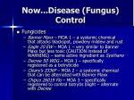 now disease fungus control