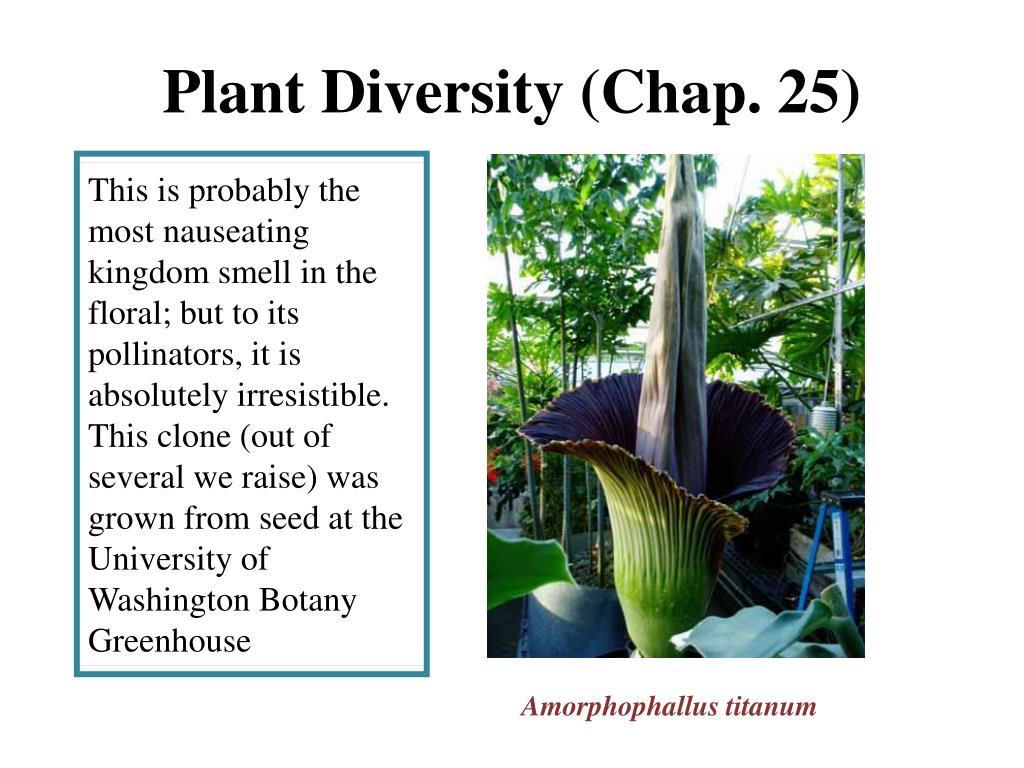 plant diversity chap 25 l.