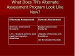 what does tn s alternate assessment program look like now